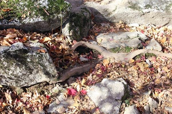 단풍은 낙엽되어 떨어졌습니다. 이 모든 건 다가 올 봄을 기약하는 행위입니다. 인간에게 미래가 있는 이유이기도 합니다.
