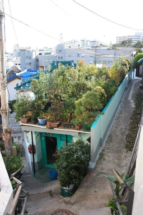 성북구 장수마을  지붕에 수백개의 야생화가 있는 집