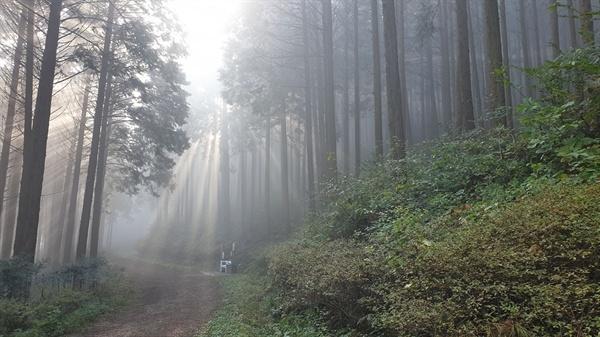 무등산편백휴양림 편백숲의 아침 풍경. 편백숲 사이로 아침 햇살이 들어오고 있다.