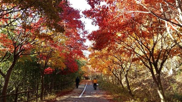 이즈음 풍암정으로 가는 길의 붉은 단풍은 아름다움의 경지를 넘어선다. 처연(凄然)하다는 표현이 맞을 듯싶다