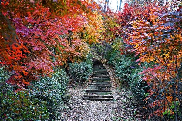 봉산 산책로의 가을 풍경