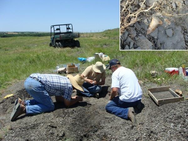 미국 캔자스주 팁톤 인근 지역의 한 목장에서 2010년 발굴팀이 9100만년 전 살았을 것으로 추정되는 상어의 이빨 화석 등을 가려내고 있다.