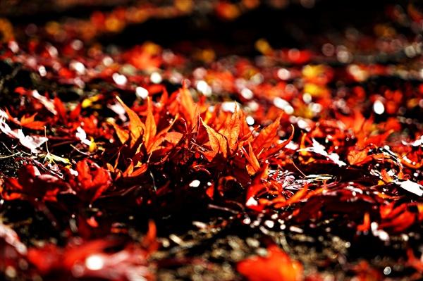 월드컵공원. 떨어진 낙엽