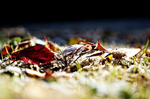 간밤에 내린 서리와 낙엽