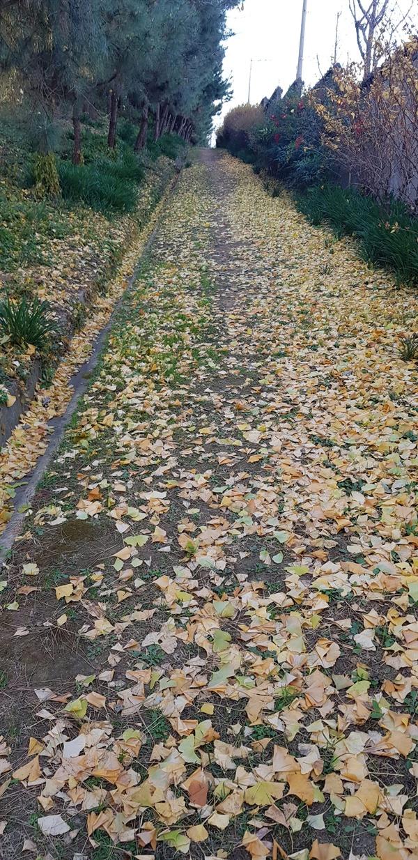 수도원 안의  산책길에 쌓인 낙엽들