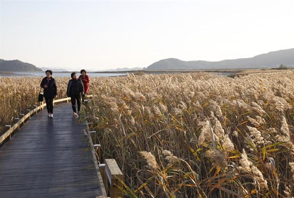 강진만 갈대밭. 여행객들이 갈대밭 사이로 놓인 나무 데크를 따라 거닐며 늦가을의 정취를 만끽하고 있다. 지난 11월 22일이다.