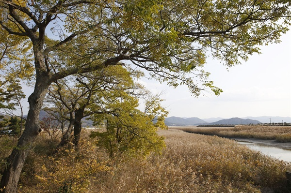 강진만 갈대밭을 배경으로 들어서 있는 남포마을의 멀구슬쉼터. 마을 주변의 멀구슬나무를 중심으로 쉼터를 만들어 놓았다.