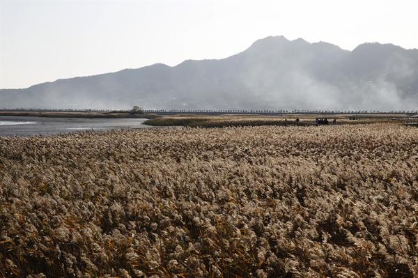 강진만 갈대밭 풍경. 뭍으로 깊이 들어온 강진만은 드넓은 갯벌과 갈대밭으로 해양생태계의 보고로 인식되고 있다.