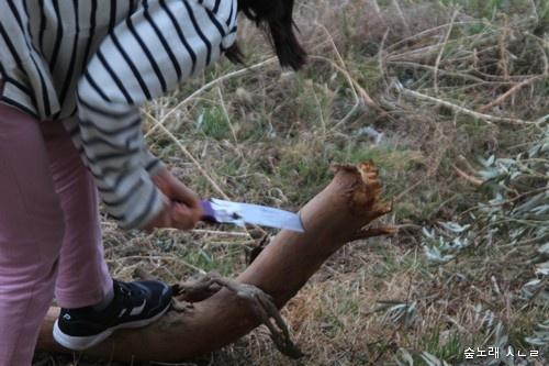 아이들은 톱질을 하면서 나무랑 놀 수도 있다. 아이가 즐겁고 든든히 놀며 자라도록 삶터를 가꾸면 될 뿐이다.