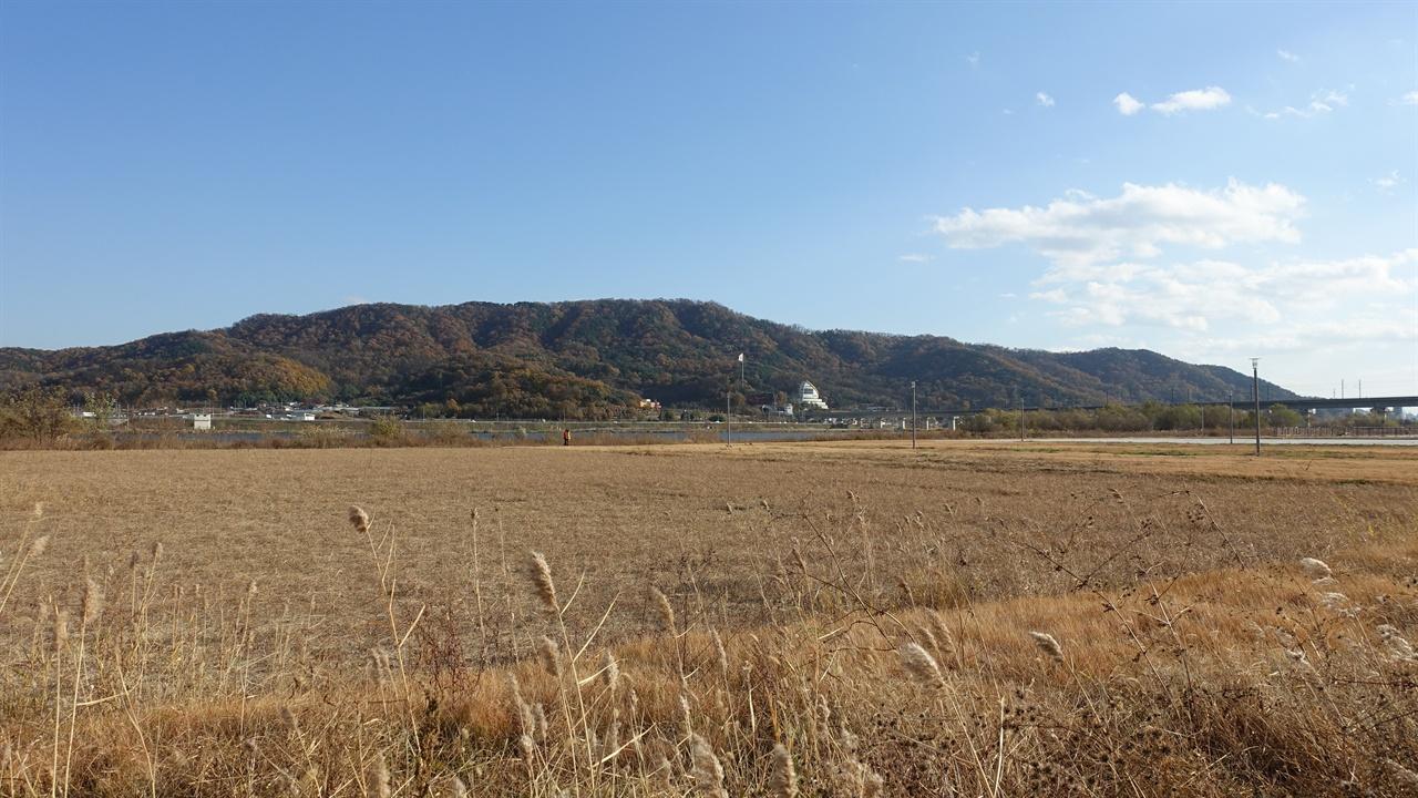 관호산성 둘레길의 갈대밭.