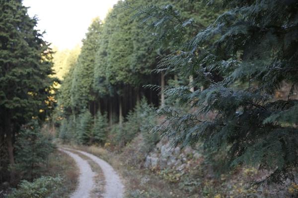 보성윤제림의 편백숲. 정은조 숲속의전남 이사장이 아버지의 대를 이어 가꾸고 있는 숲이다.