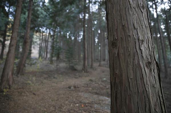 보성윤제림이 품은 편백숲. 사철 아무 때라도 마음 속까지 편안하게 해주는 숲이다.