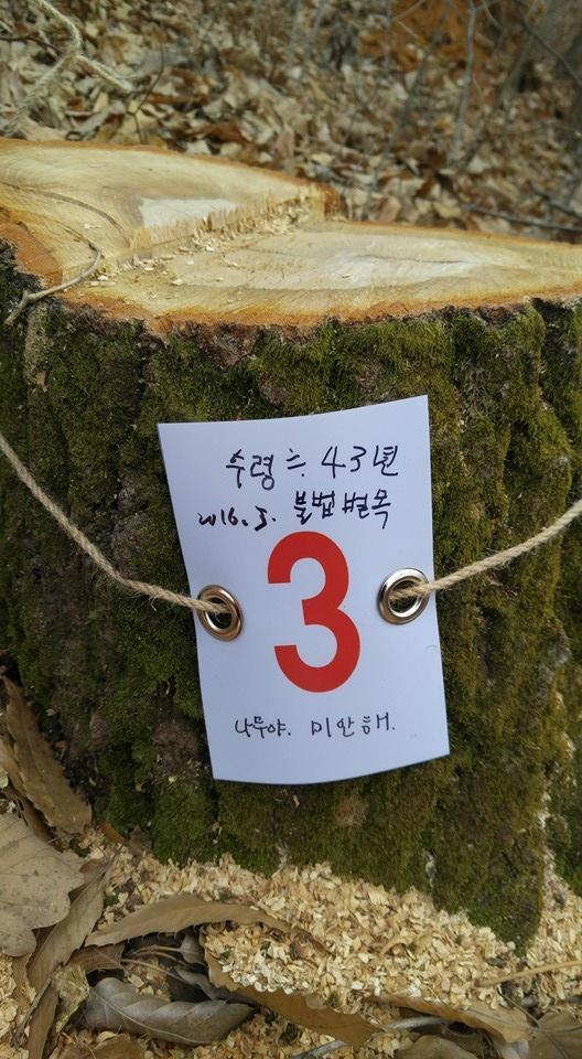 나무를 죽이는 방법 1 원형보전림으로 지정된 곳의 30~60년 된 참나무 열한 그루가 베어졌다. 트럭을 몰고 들어와서 벤 나무를 싣고 나간 자리에 멍하게 하늘을 보는 그루터기와 톱밥 냄새만 남아있었다.