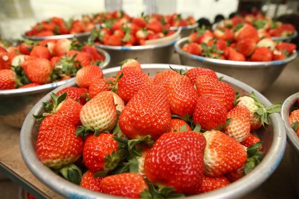 김해한림 딸기, 홍콩에 수출.