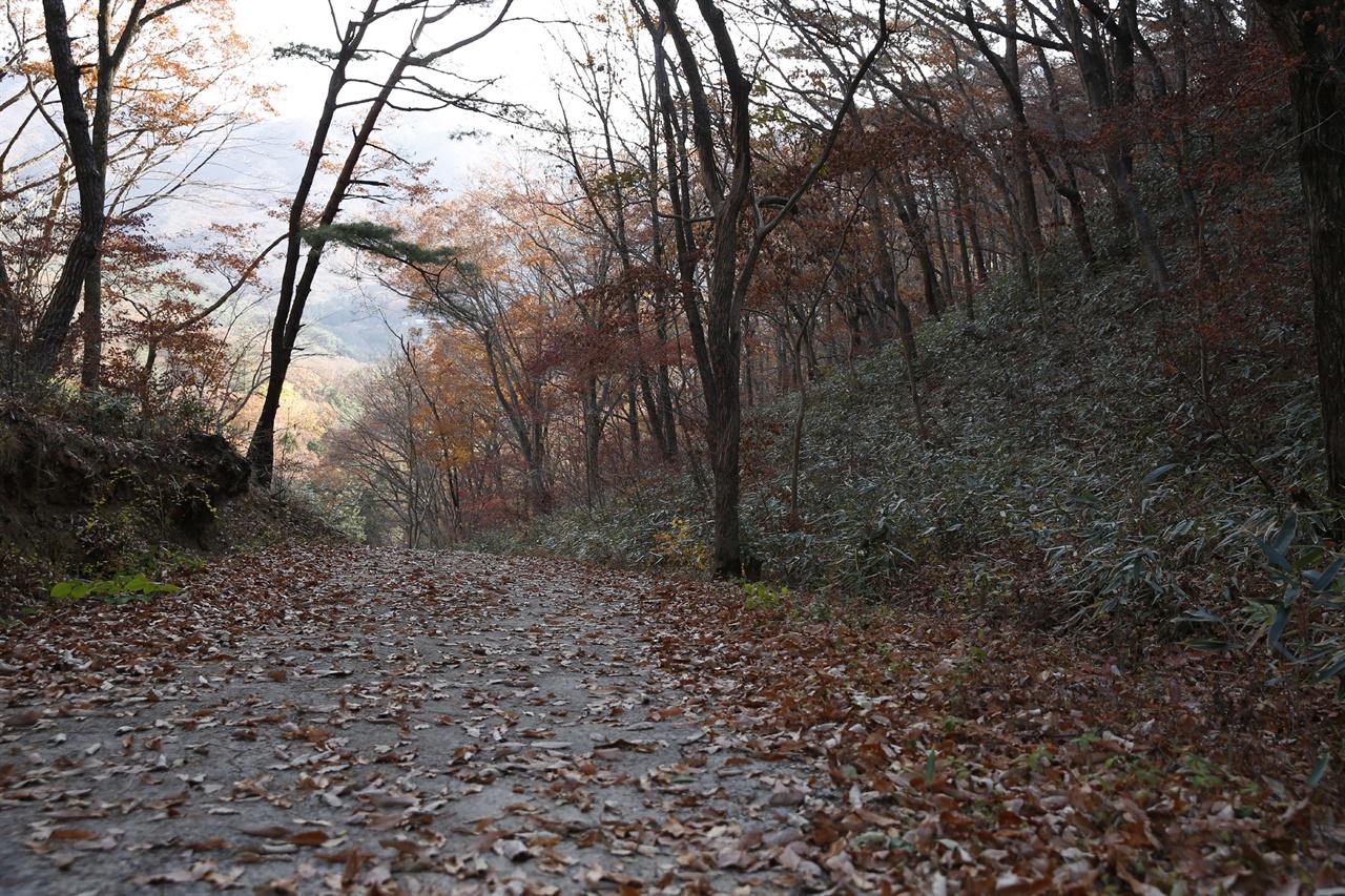 송광사와 불일암을 잇는 숲길. 낙엽이 수북하게 쌓여 고즈넉한 멋을 선사한다.