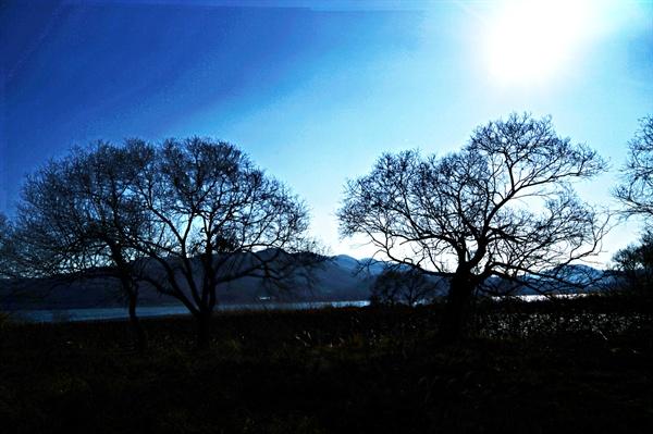 양수리 겨울나무들