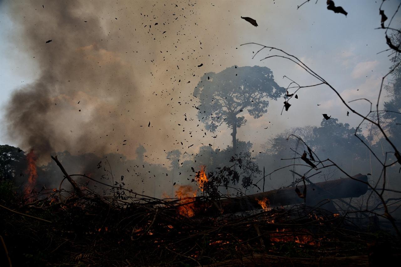 지난 여름 불타고 있는 아마존