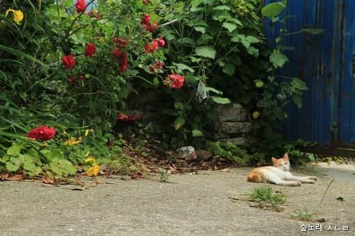 고양이 몸에 폭탄을 묶어서 떨어뜨린다는 '생각'은 어떤 머리로 할 수 있을까요? 평화가 아닌 전쟁만 그리기에 하는 생각이었을 테지요.