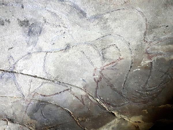 호이트 쳉헤르 동굴벽화로 몽골에 살고 있는 야생마 '타히'로 추정된다.