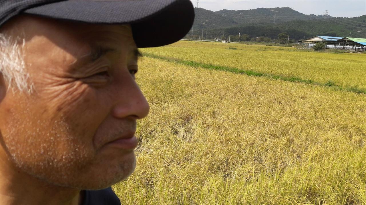 수확을 앞둔 논에서 먼 곳을 응시하는 이해경 단장 아무것도 쏟아주지 않은 논이지만 잡초도 찾아보기 힘들고 벼는 잘 자라고 있었다.  자연농법으로 키운 농작물의 힘을 믿기에 이해경 단장은 죽을 때까지 자연농법을 지속할 것이라고 밝혔다.