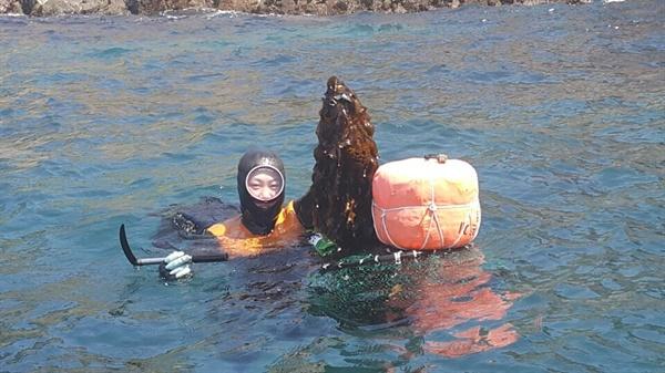 제주의 최연소 해녀인 정소영 해녀가 자신이 잡아올린 미역을 물 속에서 들어보이고 있다.