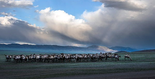 수타이산으로 들어가는 입구 벌판에는 낙타들이 떼지어 있었다