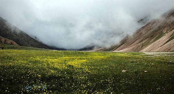 한 여름 몽골여행은 이런 눈호강을 하기도 한다. 야생화가 멋지게 피어있는 뒤로 안개가 몰려오고 있다