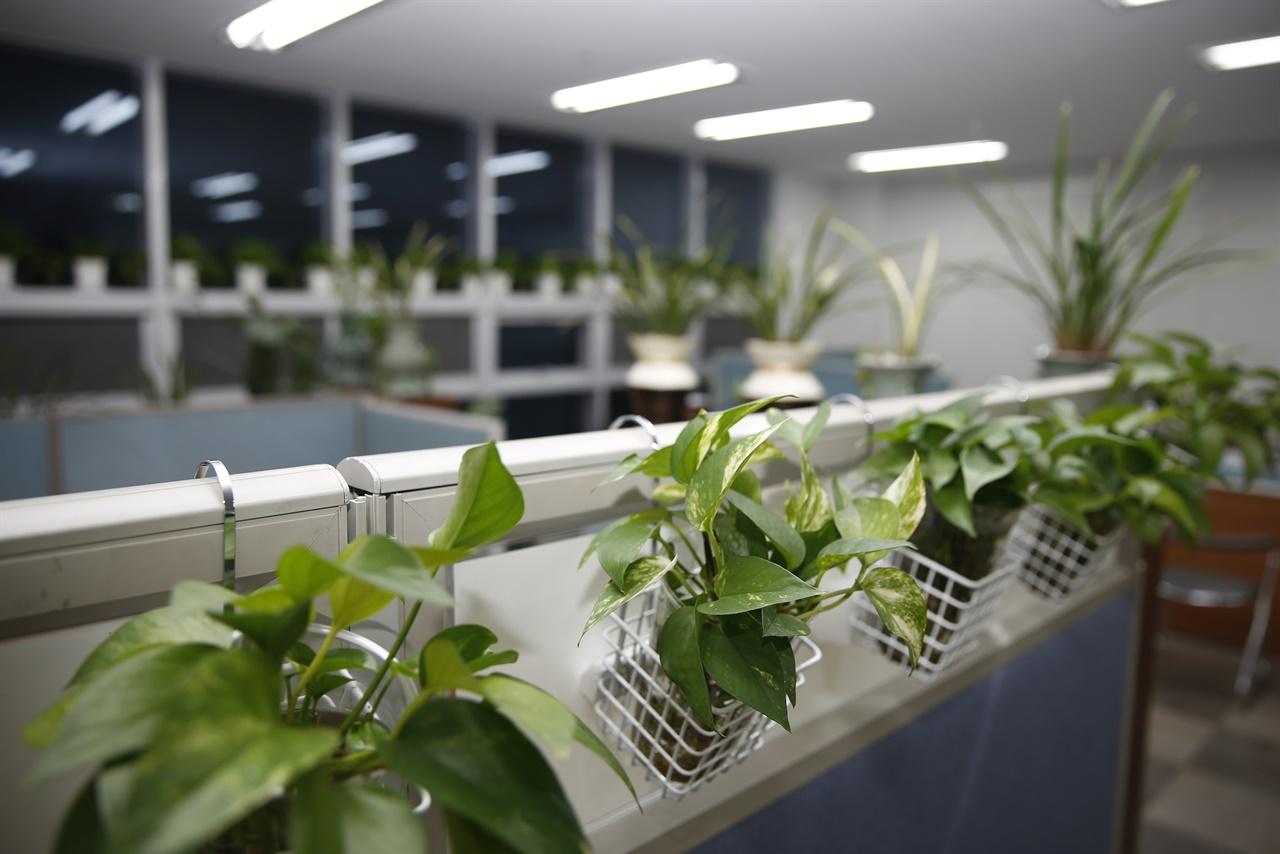 조미선 씨가 일하는 사무실 풍경. 크고 작은 화분으로 가득 차 있다. 꽃집이라 해도 괜찮을 정도다.