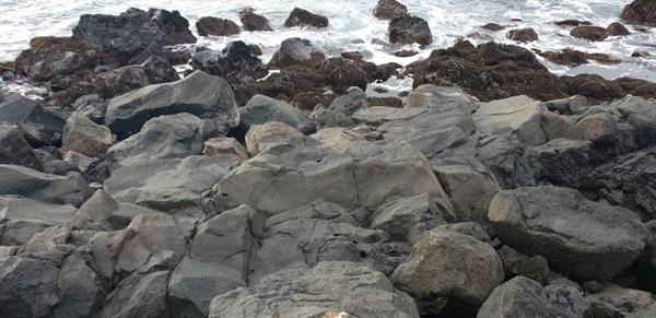 비양도의 용암바위들 파호이호이 용암바위입니다.