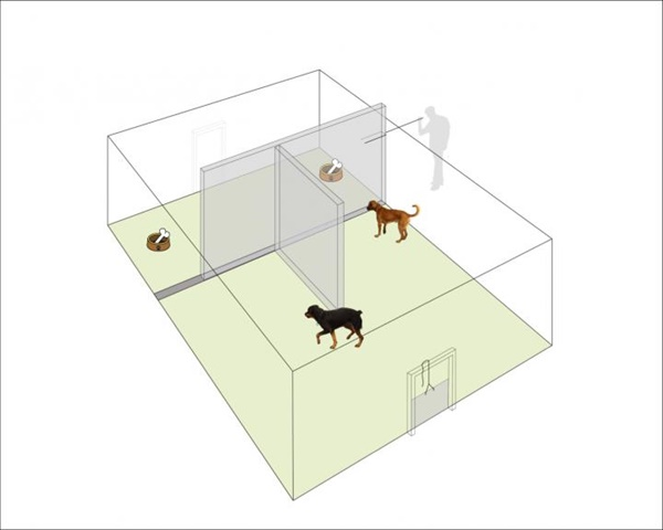 개와 늑대의 먹이 사냥 때 협업 관계를 알아보기 위한 실험장치 모식도. 먹이를  놓아 둔 공간에 출입하는 문은 하나였는데, 개의 경우 서열이 낮은 개가 먼저 먹이로 접근했지만, 늑대는 반대로 서열이 높은 개가 출입문으로 들어섰다.