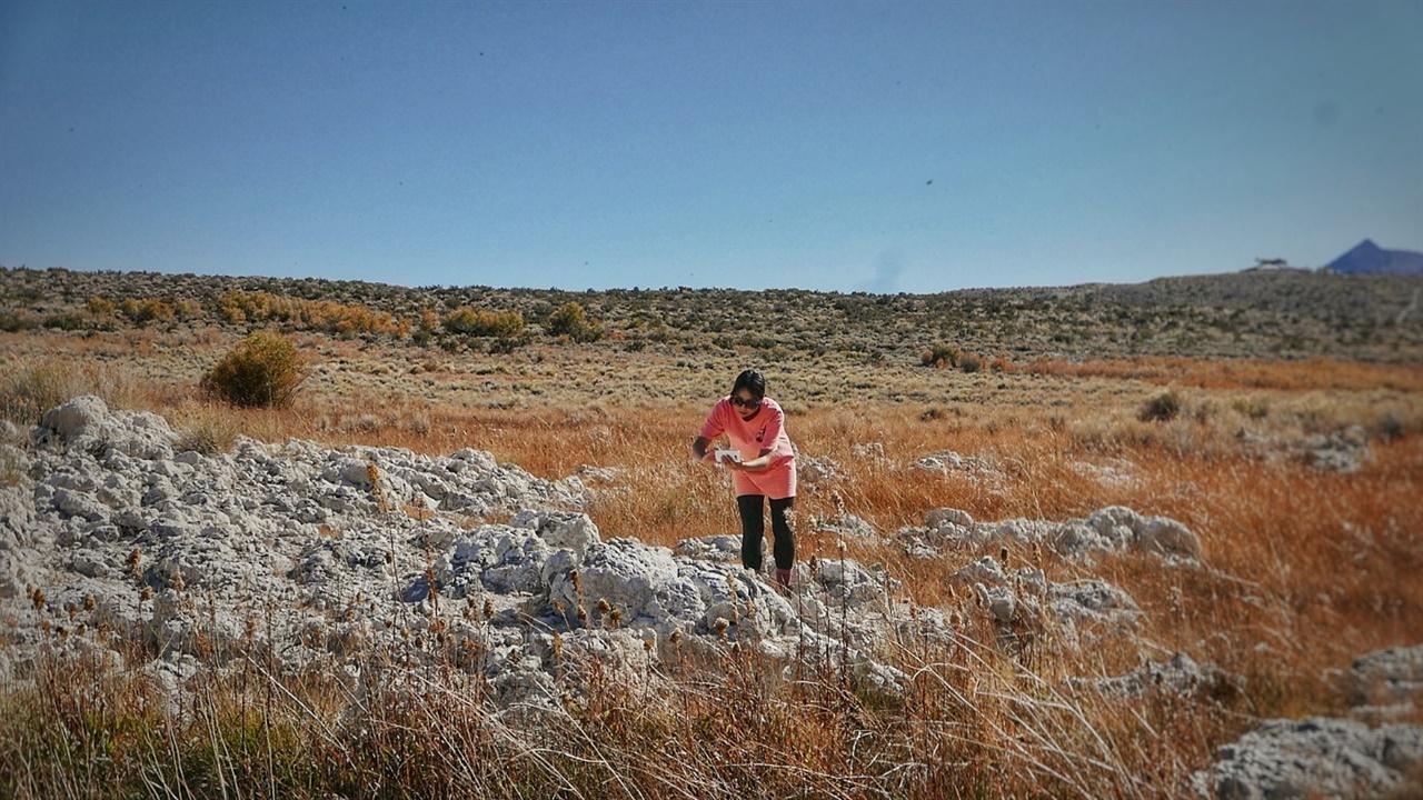물에 잠겨 있던 석회석 침전물이다. 환경 파괴로 호수 수위가 낮아지면서 모습을 드러냈다.