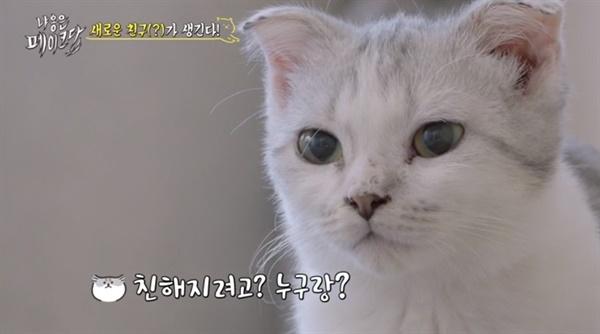 tvN 새 예능 <냐옹은 페이크다> 한 장면