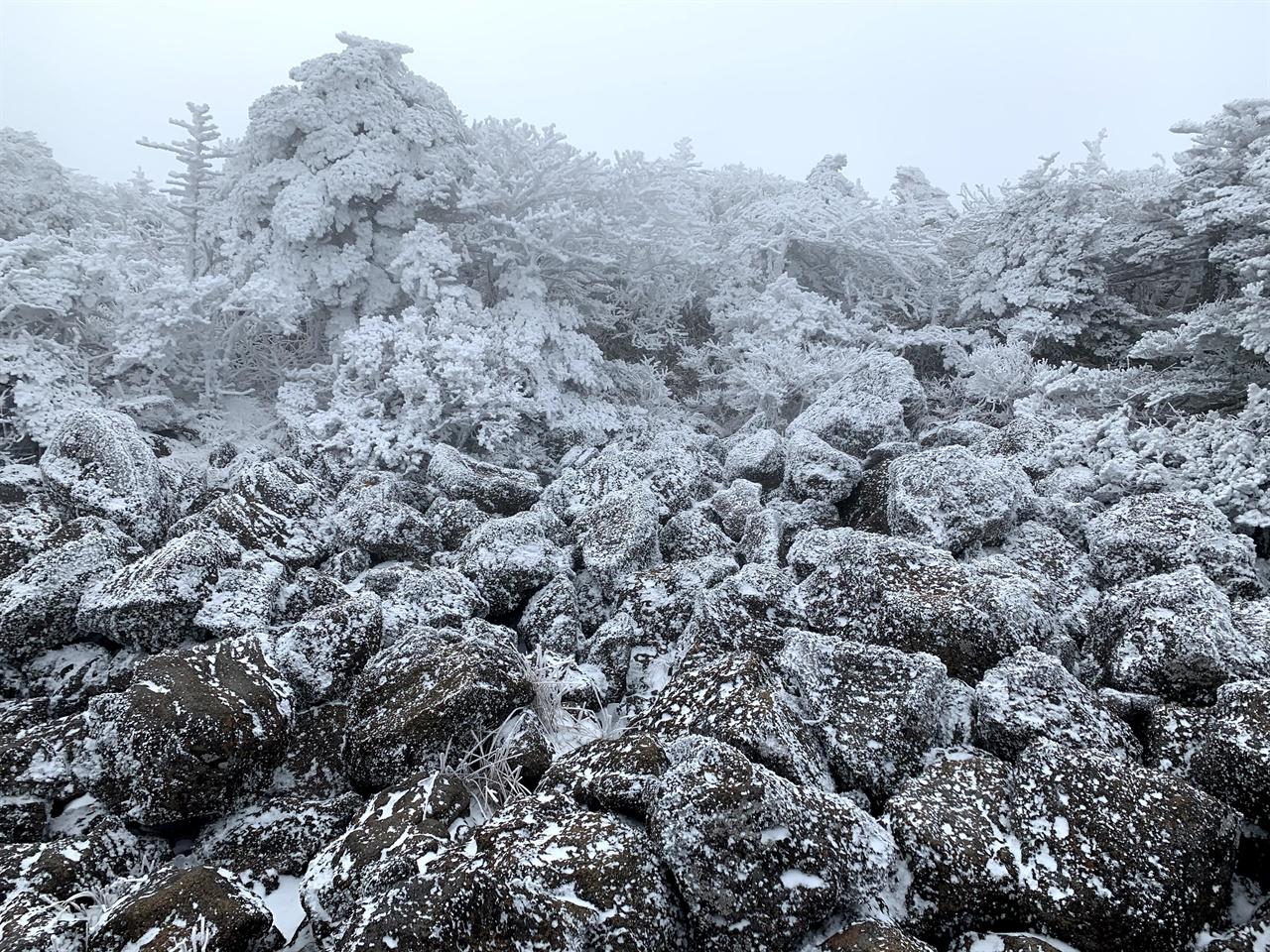 <겨울 왕국>의 트롤들이 잠자고 있는 걸까요? 올라가는 길, 안개로 자욱한 길 곳곳에서 <겨울 왕국>을 만났어요. 조금 춥기는 했지만, 오랜만에 만난 하얀 눈으로 가득한 풍경만으로도 행복했답니다.