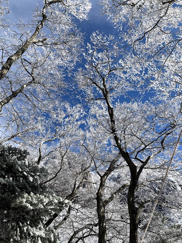 무사히 하산했습니다.  겨울의 나무에는 반짝이는 눈꽃이 피어난다는 거, 아세요? 머리 위로 파란 하늘과 이제는 모습을 드러낸 영실기암이 놀라운 풍경입니다.