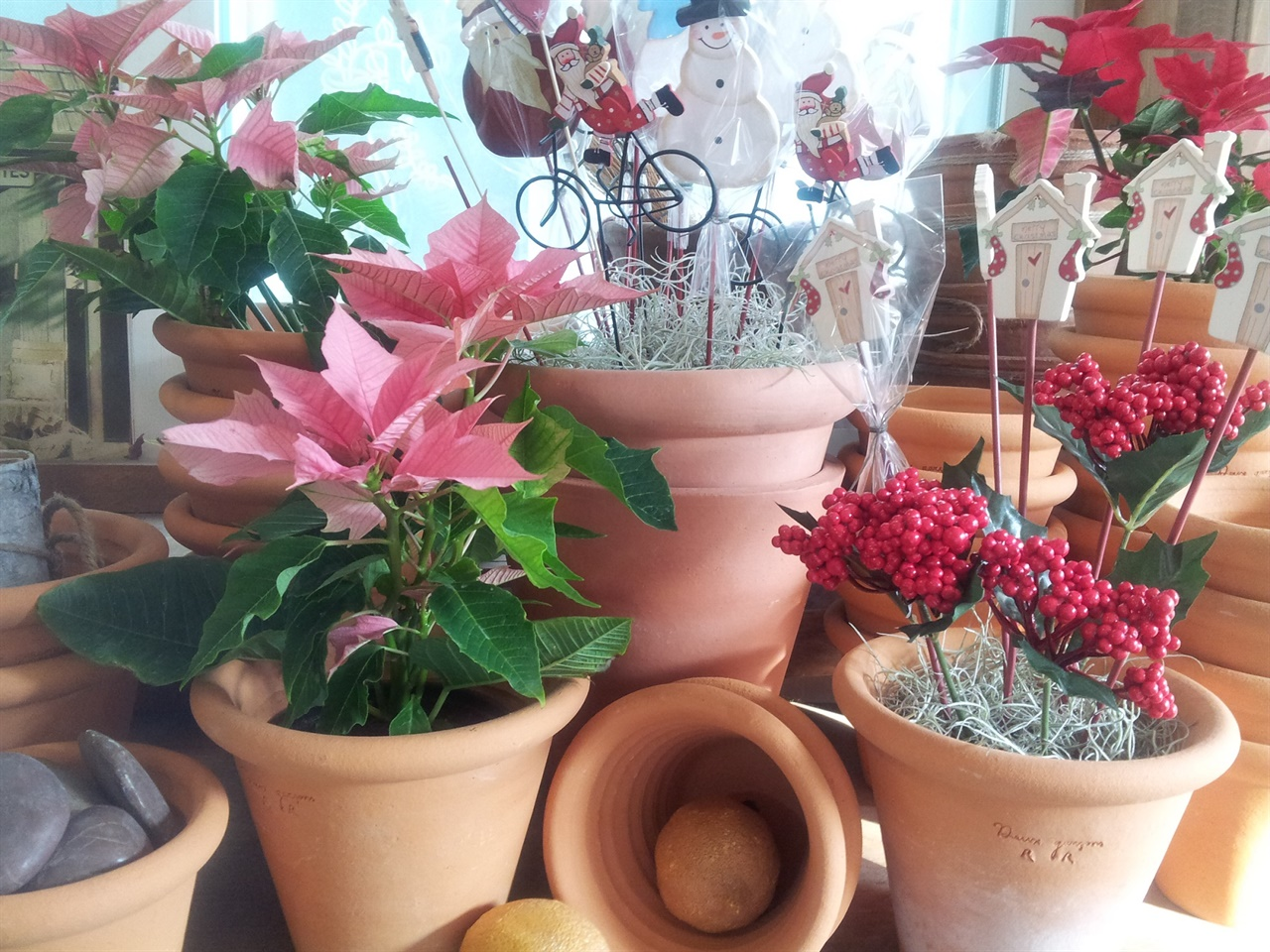 포인세티아 포인세티아는 겨울 장식으로 인기가 많다. 어떤 장식물과도 잘 어울리고, 특히 토분에 심으면 찰떡궁합이다.