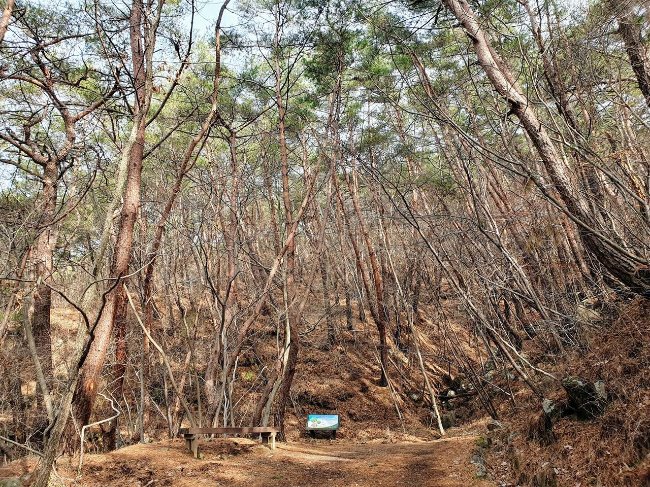 구례 천은사 소나무 숲길