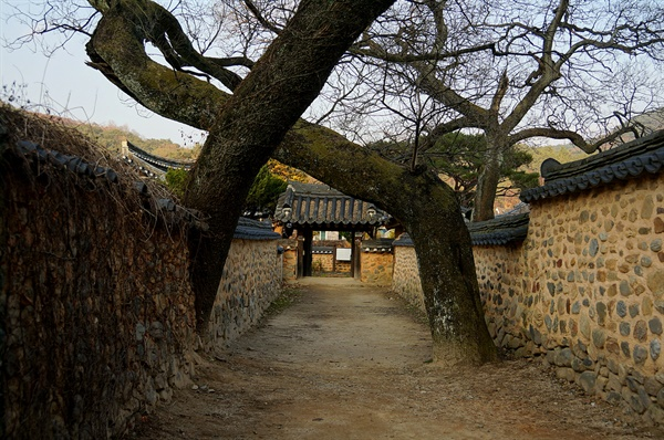 이씨고가 회화나무 몸 섞어 자라는 두 그루의 회화나무는 용의 불기운을 누그러트리려 심었다 한다. 부부가 이 나무 아래를 지나면 백년해로한다 하여 남사에서 제일 인기가 좋다.