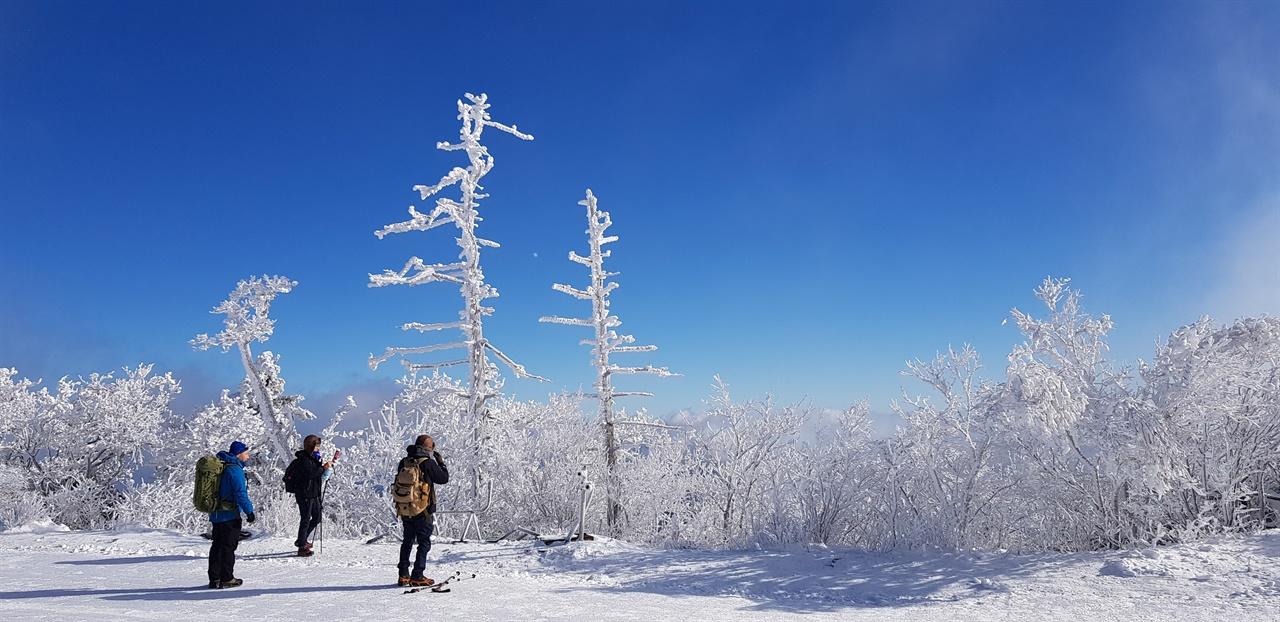 설천봉 고사목   죽은 나무도 겨울이면 되살아나 파란 하늘 아래서 하얀 꽃을 피운다.