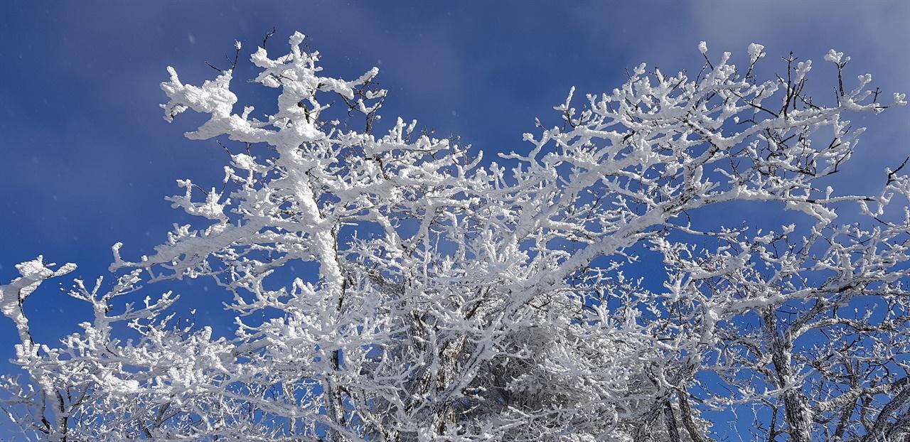 파란 하늘과 서리꽃   앙상하던 나무에 서리꽃이 앉았다.