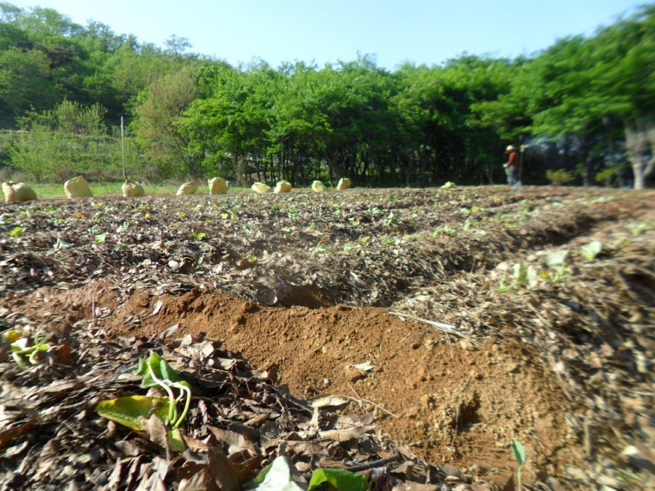 농사가 잘 되는 방법은 흙을 살리는것이다
