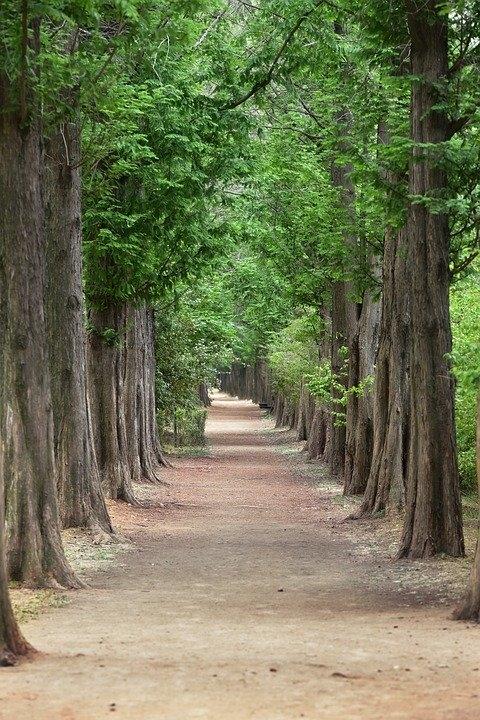 소설에서 묘사하는 수업 장면은 하나같이 우스꽝스럽다. 학생들은 A교수가 시키는 대로 나무를 껴안고, 나무에게 말을 걸고, 나무를 느낀다.
