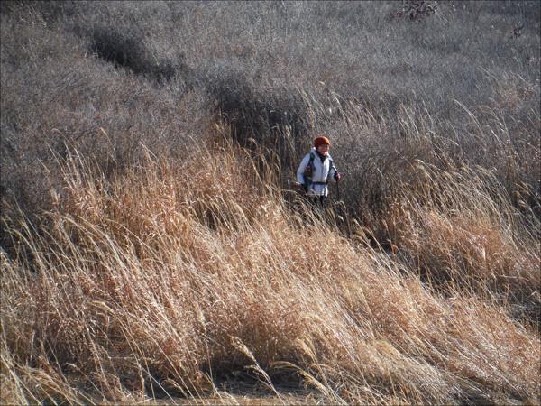 눈부신 억새밭과 우두산 철쭉군락지를 지나며.