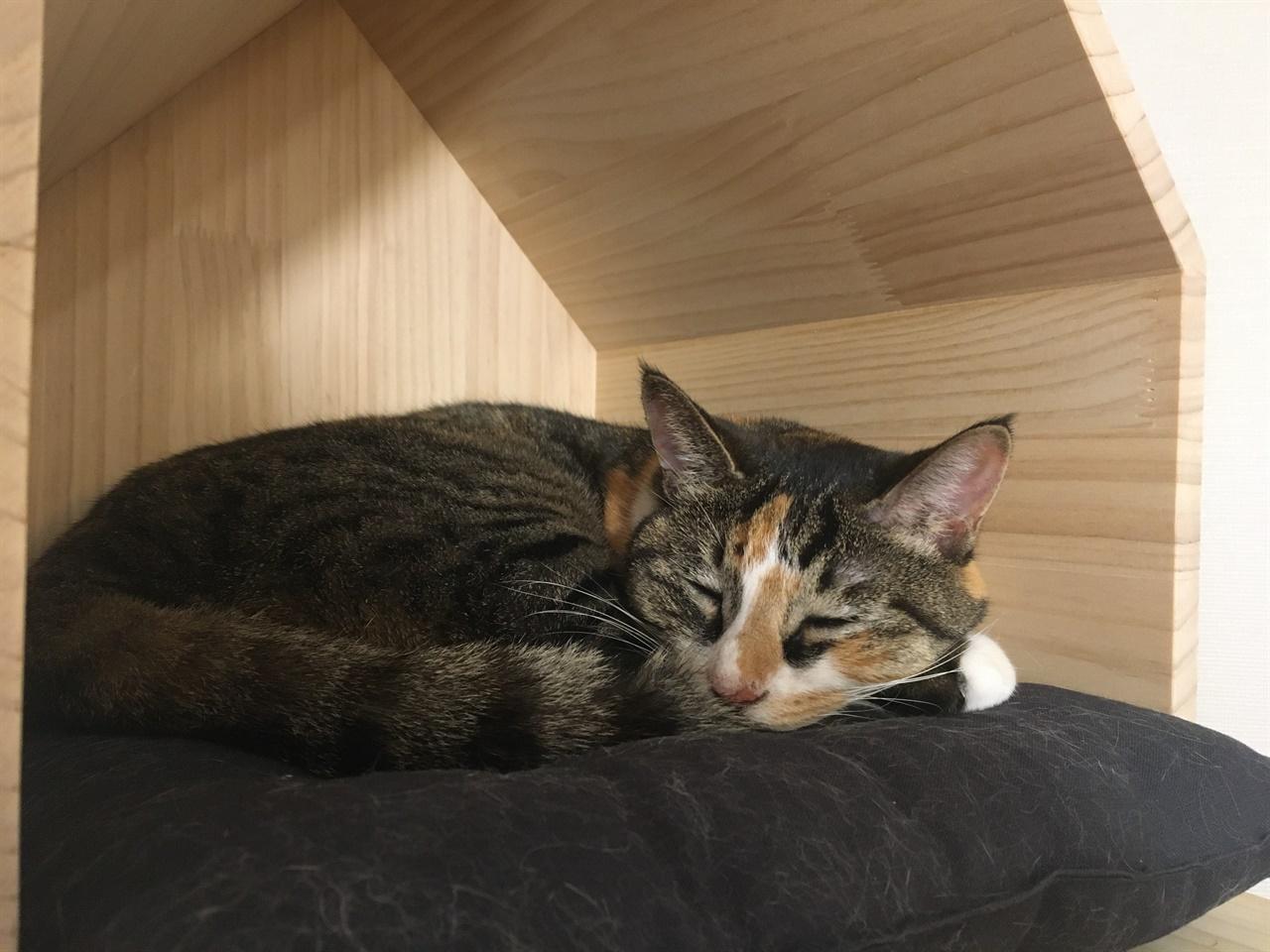 잠든 고양이