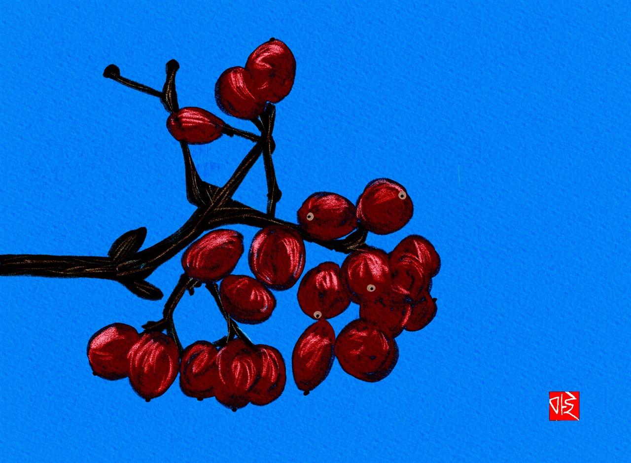 가막살나무 가막살나무 그림
