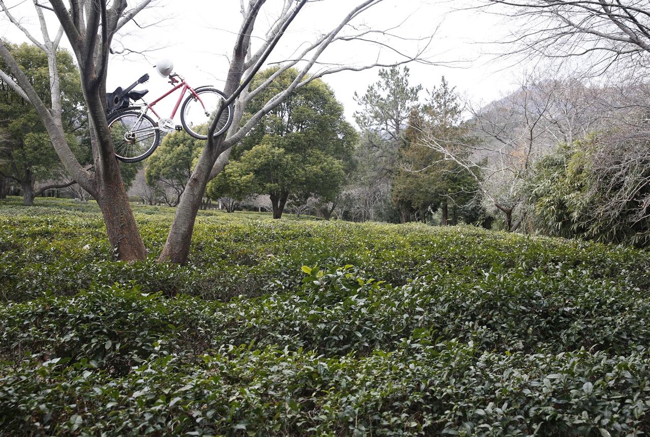 두륜산이 품은 해남 설아다원 풍경. 차밭과 어우러지는 녹나무에 자전거와 기타가 올려져 있다.