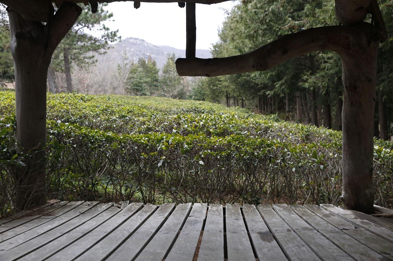 차밭쉼터에서 본 설아다원 풍경. 두륜산이 보이고, 삼나무가 차밭을 둘러싸고 있다.