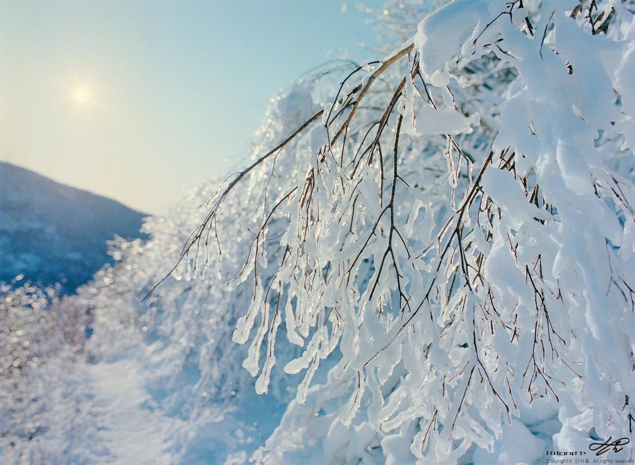 얼음 샹들리에 (645N/Portra400)바람이 불면 나뭇가지에서 샹들리에의 크리스탈 장식이 부딪히는 소리가 났다.