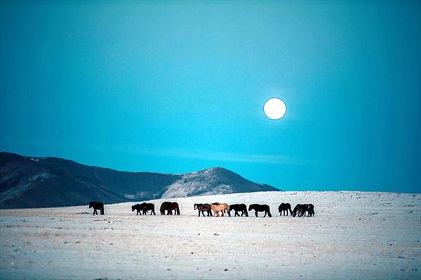 울란바타르에서 볼강으로 가던 도중에 만난 말들. 보름달아래서 풀을 뜯는 모습이 환상적이다