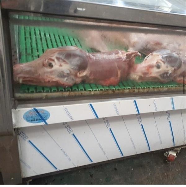 대구칠성시장 불법 도살된 개들의 머리와 다리가 냉동고에 줄지어 보관되고 있다
