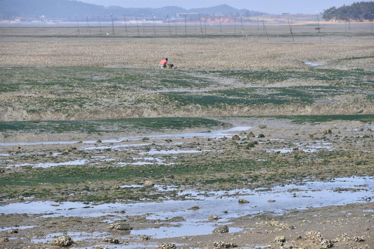 갯가에서 갯살림을 일구는 마을 어민 하루에 두 번 물이 쓰고 드는 조수간만의 차는 어민의 일상을 풍요롭게 해준다. 밀물엔 어장을 살피거나 조업을 하고, 썰물엔 훤히 드러난 갯벌을 걸으며 고둥이나 굴, 감태 등 다양한 갯것을 얻는다. 물때와 바다 지리를 잘 아는 지역의 어민은 늘 부지런하다.